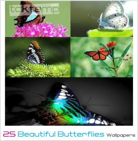 25-Beautiful-Butterflies-Wallpapers