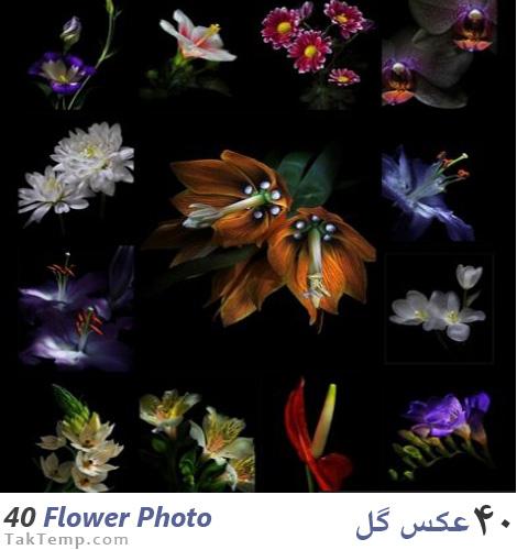 40flower