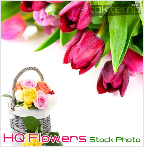 HQ-Flowers-Stock-Photo