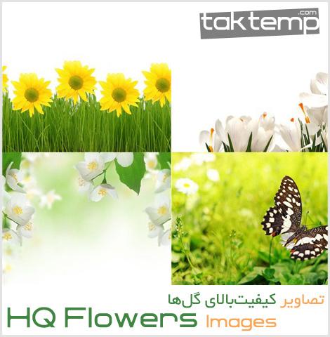 hq-flower1